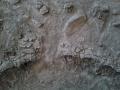 moonplatte45.jpg